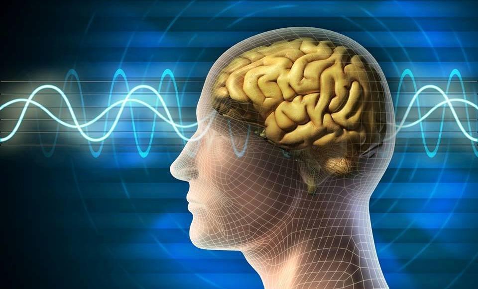Положительное влияние на сердце, мозг