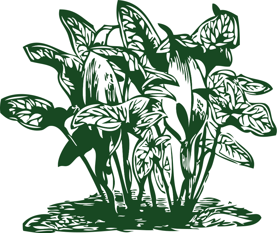 Растительное происхождение
