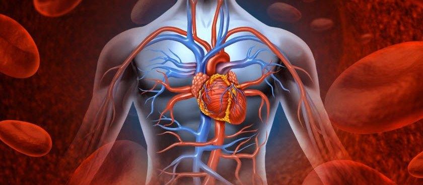 Проблемы со стороны сердечно-сосудистой системы