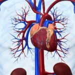 Болезни сердечно-сосудистой системы